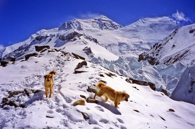 Two Everest dogs at 19000 feet