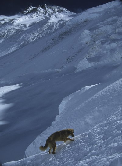 An everest dog on a steep slope